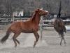 Konie w Białej Podlaskiej
