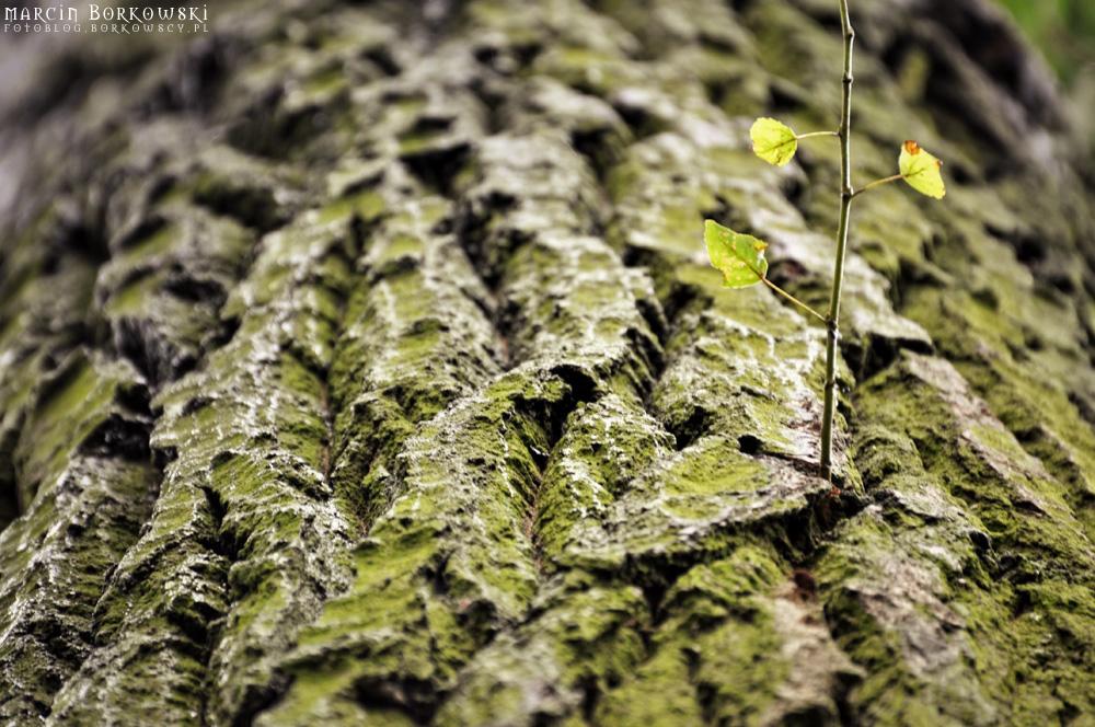 Kora drzewa - 09