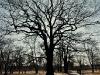 Drzewo w Parku Miejskim w Piasecznie - 4
