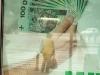 Gdzie leżą pieniądze na ulicy i jaki jest ich nominał?