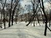 Park Radziwiłłów w Białej Podlaskiej - 9
