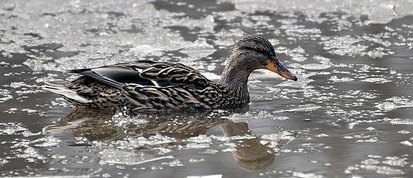 Zdjęcia ptaków z Parku w Warszawie