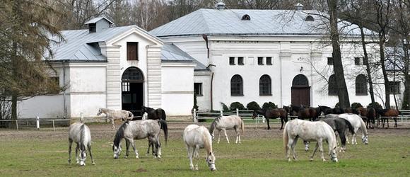 Fotoreportaż po stadninie w Janowie Podlaskim