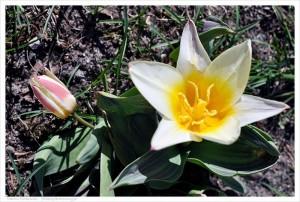 Kolorowe oznaki wiosny