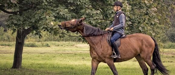 Koń Tornado – zdjęcia chłopca na koniu