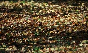 Jesienne liście w Parku Łazienkowskim