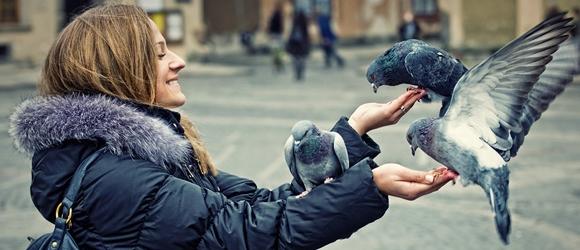Gołębie na Starym Mieścicie w Warszawie
