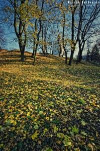 Jesień w Białej Podlaskiej