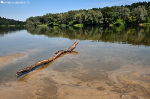 Rzeka Bug w Serpelicach