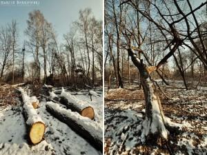 Zima w Zalesiu Dolnym