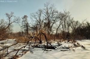 Zimowe zdjęcia z Zalesia Dolnego