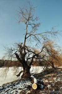 Zimowe zdjęcie z okolic Górek Szymona